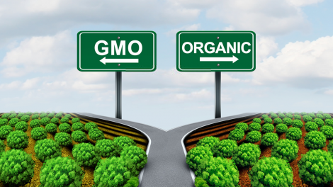 """A picture of GMO vs. Organic with a fork in the road - showcasing the decisions people might purchase when thinking about their health and """"intangibles""""."""