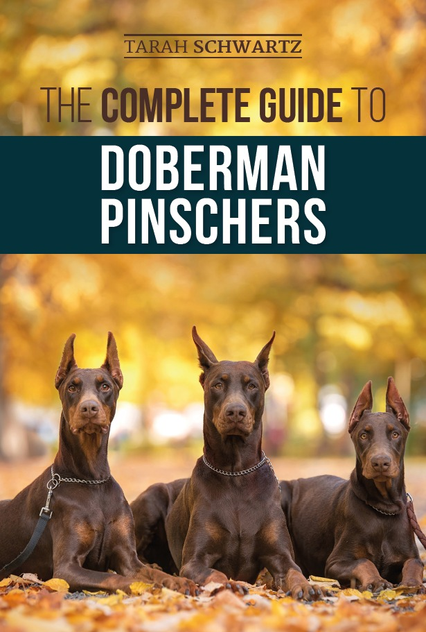 Cover image of a guide to Doberman pinschers