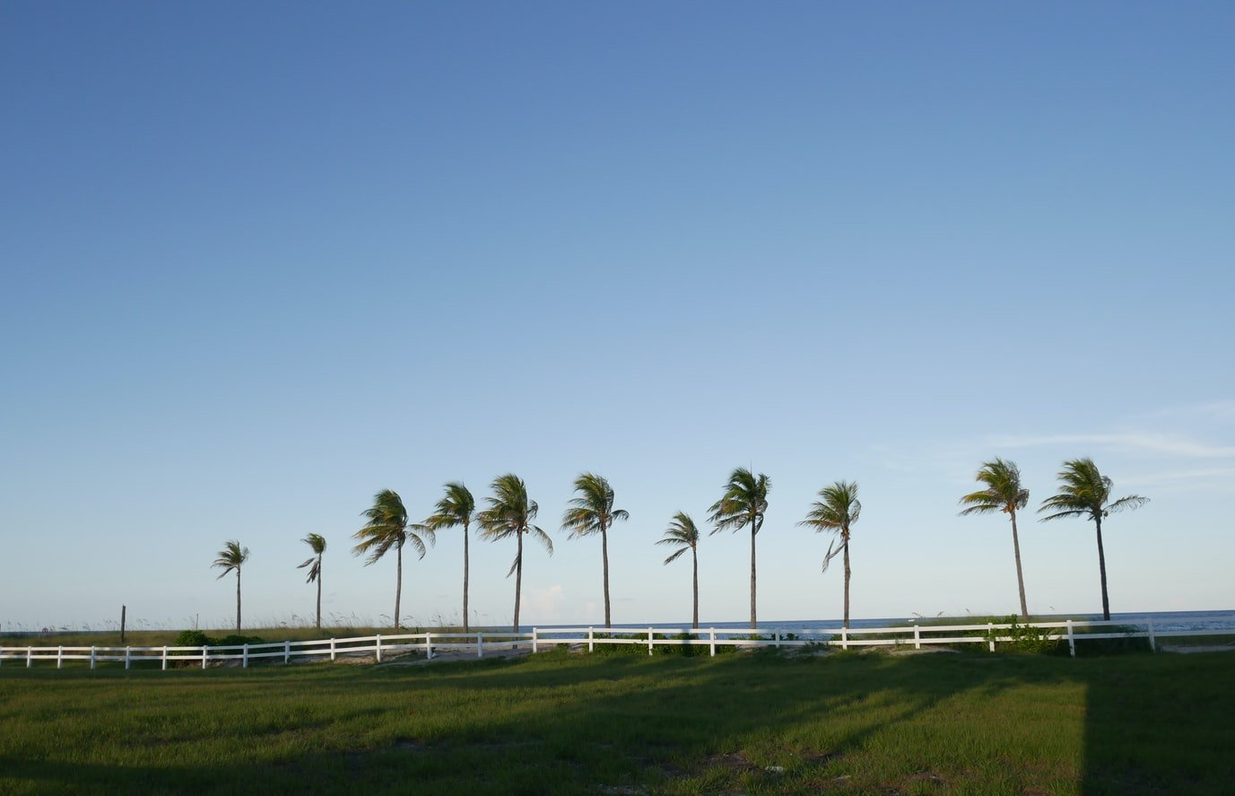 Palm trees swaying by the sea in Fort Lauderdale, Florida.